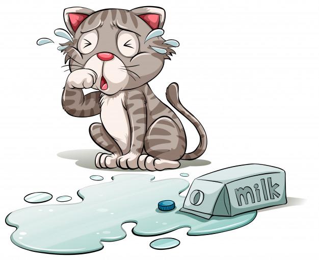 cat crying over spilt milk